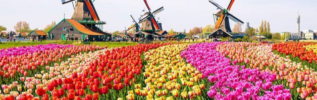 Holland – Dutch Bulbfields, Amsterdam & Volendam